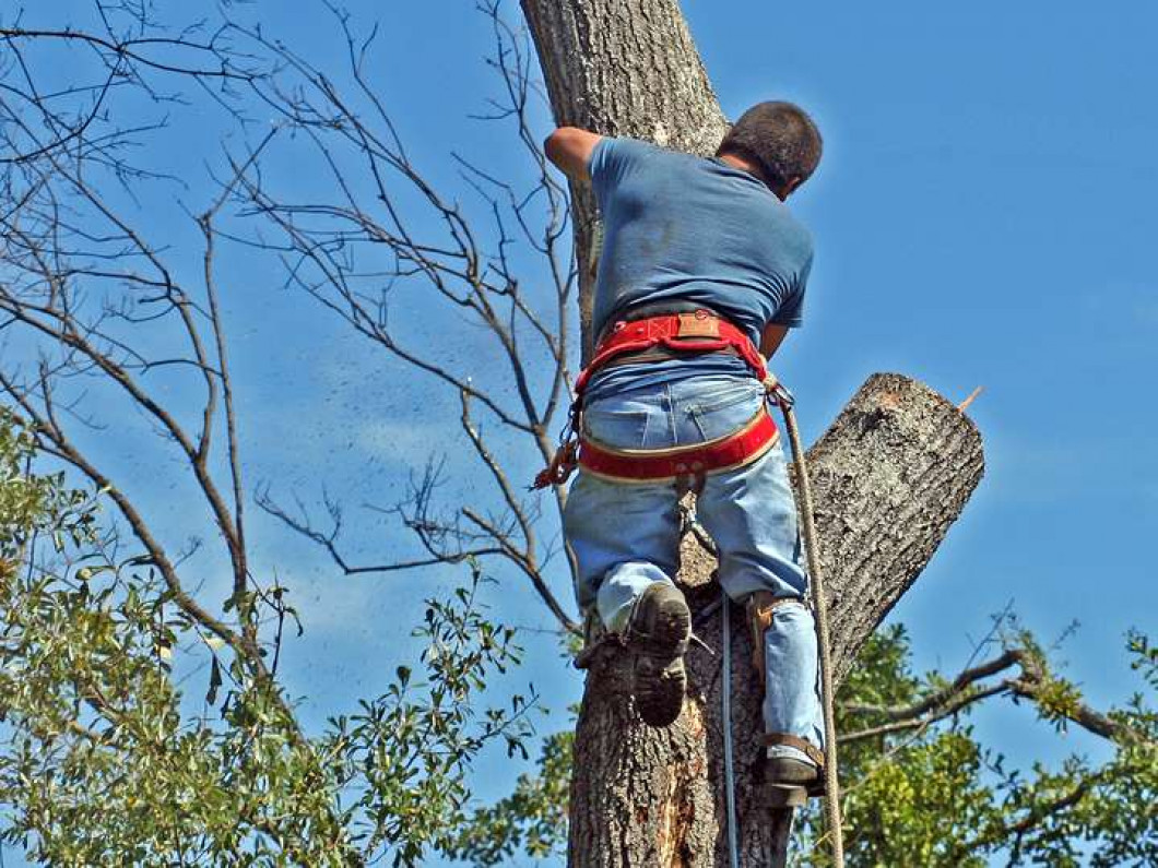 Get Expert Tree Services & Tree Trimming Service in Tyler, TX